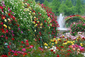 Благоустройство и декорирование усадьбы цветами