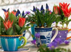 Выгонка гиацинтов и цветов к вессеним праздинкам