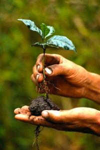 Садоводы выращивали саженцы деревьев