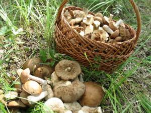 Время грибов и походов в лес