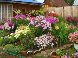 Какие цветы сеять в авгуте и сентябре