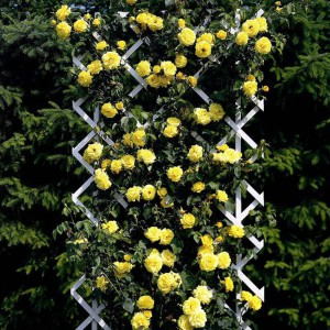 Украшение цветами и благоустройство усадьбы при помощи малых арихитектурных форм