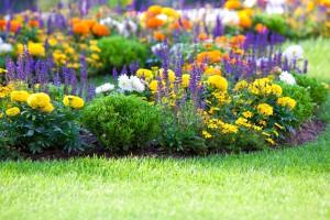 Как садить цветы под зиму