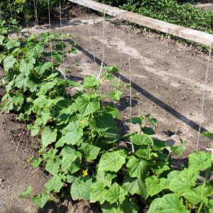 Подготовка грядок и почвы для огурцов