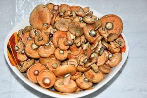 Рыжики грибы соленые рецепты